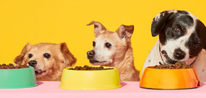 Cash Flow: Andy Murray Invests In Castore, Pet Wellness Brands Attract Funding & Lover Raises $5M
