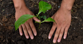 Nestlé & Other Big Players Announce Commitment to Regenerative Agriculture